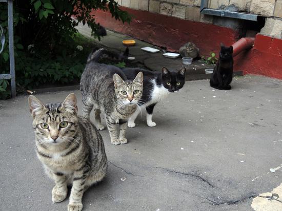 Пьяный москвич выкинул котов с 9 этажа дома