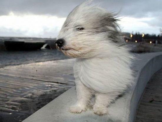 Ураганный ветер прогнозируется в Ростовской области как минимум еще на сутки