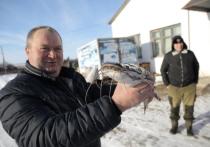 Новое рыбное производство появилось в селе Хирино