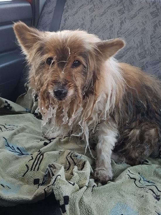 Собаку спас из проруби в центре Пскова прохожий