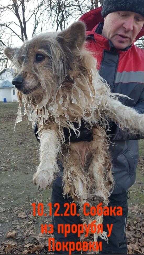 В центре Пскова прохожий спас из проруби собаку , фото-2