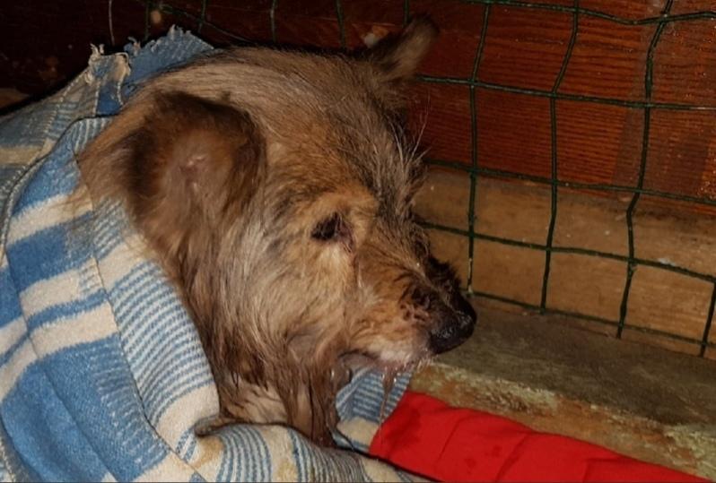 В центре Пскова прохожий спас из проруби собаку , фото-3