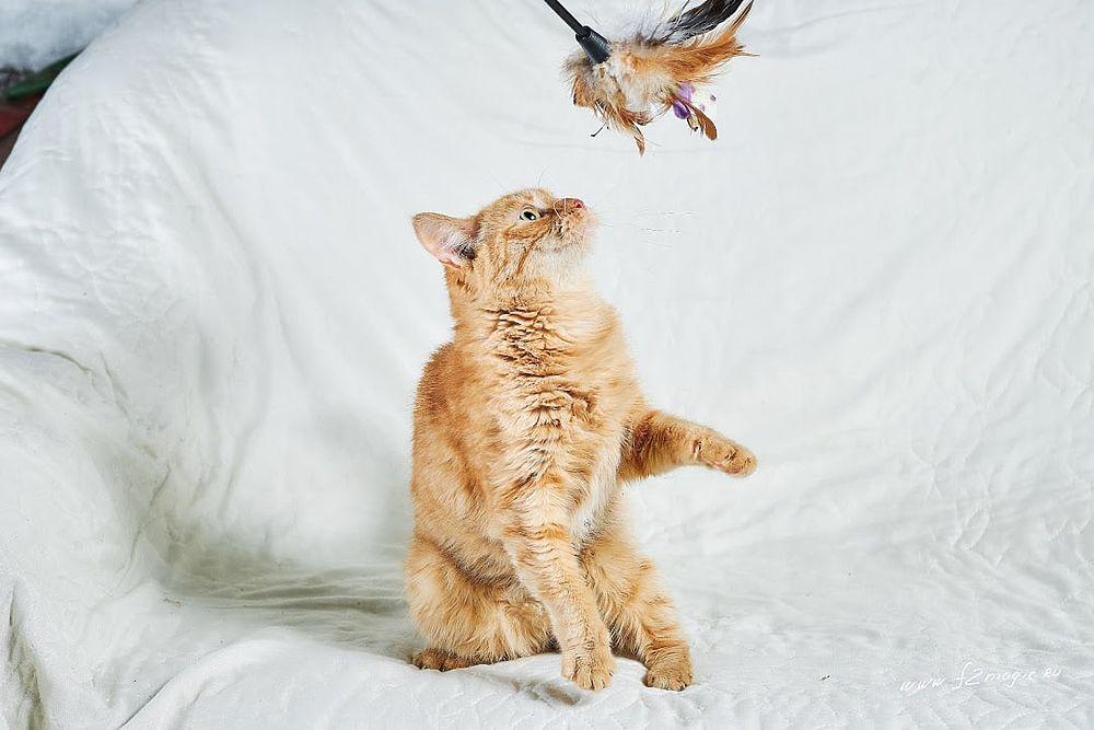 Игрушки есть, а дома нет: милые щенки и котята ждут своих хозяев