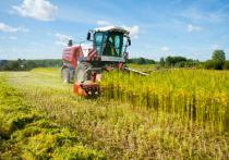 В 2020 году на территории региона намолочено 158,5 тысяч тонн зерна в бункерном весе при урожайности 25,5 центнера с гектара