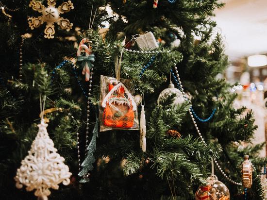 Как астраханцу выбрать самую лучшую новогоднюю ёлку?