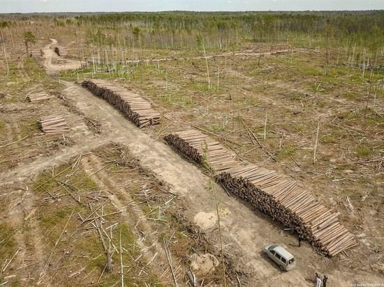 Китай продолжает быть основным импортёром леса из Томской области