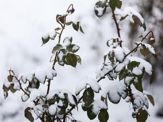 Волгоградцев ожидает 19 декабря туман, изморозь и гололед