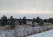 Около 300 гектаров земель Умётского района перейдут Гослесфонду