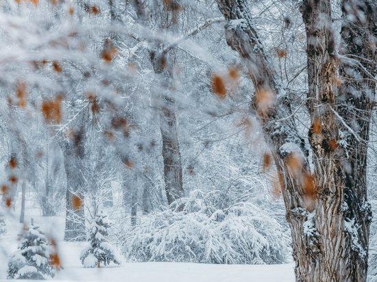 В Волгоградской области неделя начинается со снега и гололеда