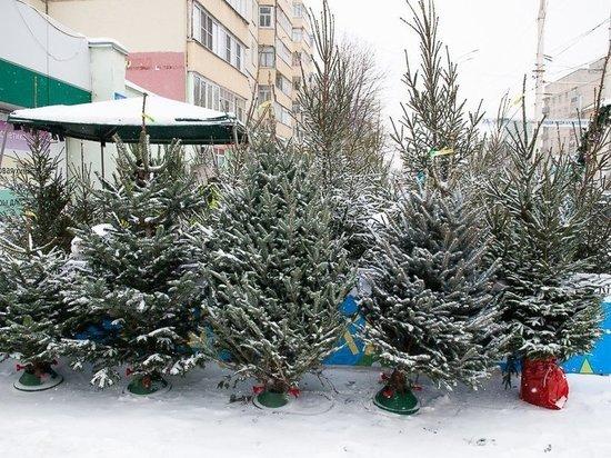 Эксперты Роскачества рассказали, как выбрать натуральную новогоднюю ёлку