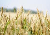 Псковская область начала поставлять зерно африканским странам