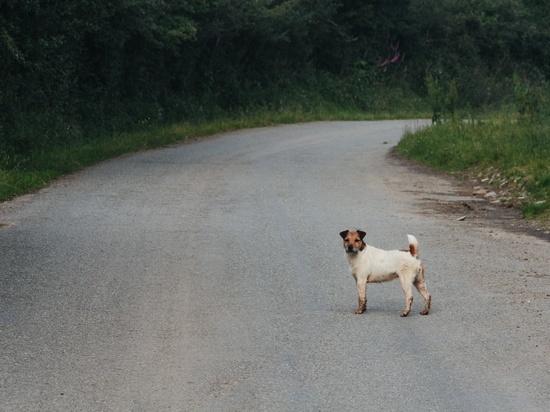 В Тверской области из-за собаки на дороге пострадали две пассажирки автобуса