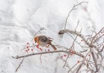 На улицах Новосибирска заметили необычно ярко-окрашенных птиц