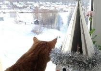 Последние дни года в Марий Эл будут снежными