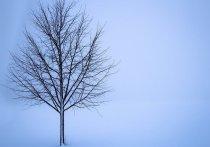 Специалисты назвали кемеровские морозы рекордными