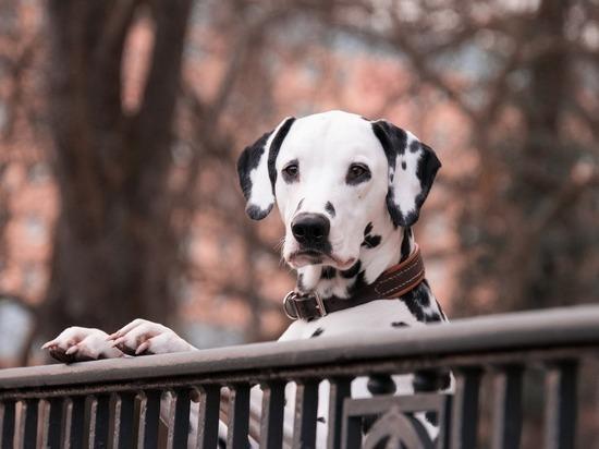 ТОП-10 популярных кличек собак в 2020 году