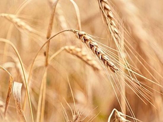 Аграриям Чувашии в 2020 году оказана господдержка в 3,4 млрд рублей