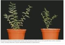 Исследователи обнаружили, что некоторые пустынные растения, присыпанные пылинками, поглощают фосфор на своих листьях и становятся сильнее