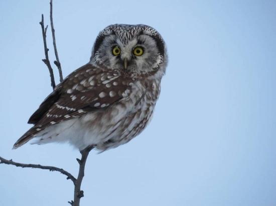 В 2020 году орнитологи обнаружили на Курилах семь новых видов птиц