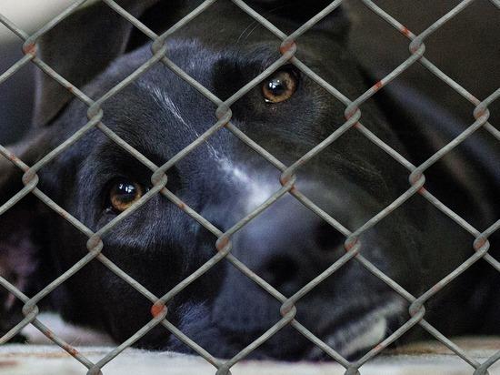 Германия: Приюты для животных испытывают финансовые трудности