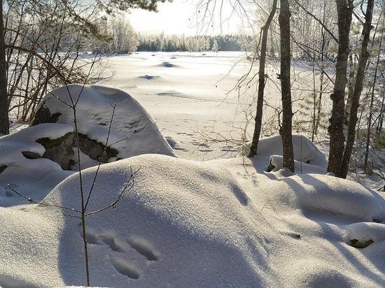 «Инвентаризацию» диких животных и птиц проведут на Ставрополье