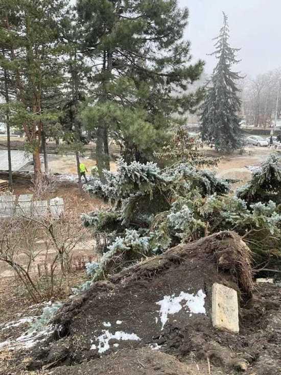 Глава Пятигорска показал на елках результаты урагана и вандализма