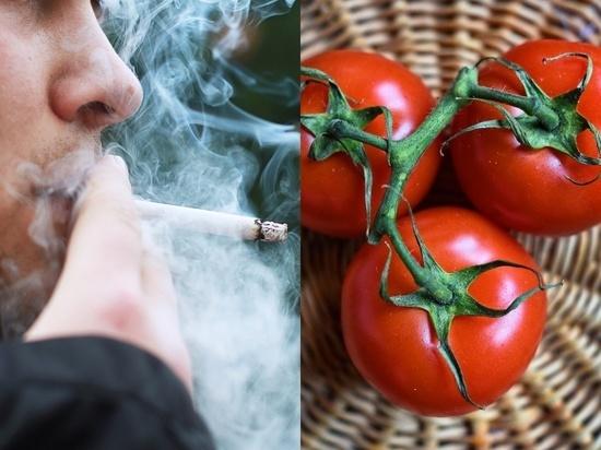 Помидоры оказались способны восстанавливать легкие курильщиков