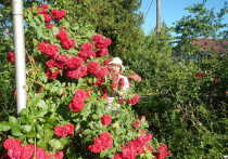 Людмила Калинина, агроном-плодоовощевод с 42-летним стажем из Тульской области проанализировала садово-огородные успехи и провалы 2020 года