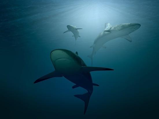 Впервые с 2013 года в Новой Зеландии акула убила человека