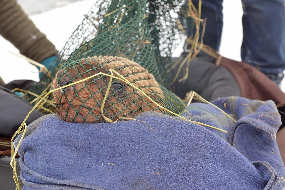 На Сахалине сивуча спасли из ледяного плена
