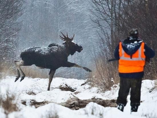 Смоленские охотники с 10 января не должны трогать лосей по новым правилам