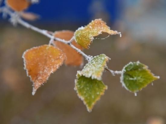 Мокрый снег и туман останутся в Волгограде 10 января