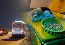 В Новосибирске работает добрый водитель маршрутки, который подкармливает пассажиров конфетами