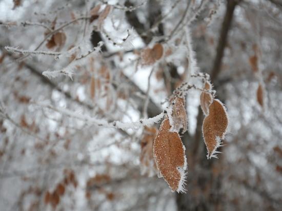 Волгоградцев 10 января ожидает снег и порывистый ветер