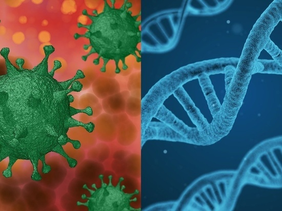 Коронавирус SARS-CoV-2 оказался способен накапливать мутации