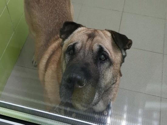 Брошенную возле ветклиники в Челябинске старую собаку хочет забрать мужчина из Иркутской области