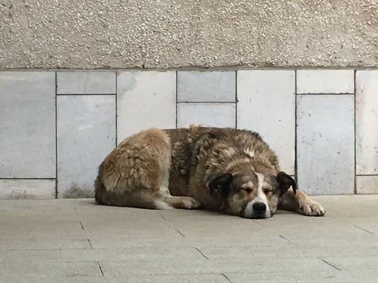Бешеные псы Смоленщины: перед новым годом власти сняли карантин в Вязьме и деревнях