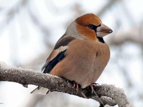 В Иванове прошла акция «Покормите птиц!»