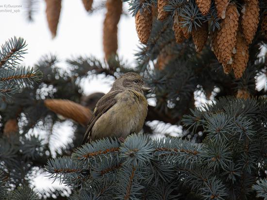 На Елагином острове поселились птицы-цыгане