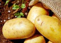 Даже прошлогодний ежедневный мониторинг цен на картошку и овощи не вызывал у нас такого ажиотажа, как запущенная в сетях информация о том, что за продажу нелегальных семян картофеля россиян теперь начнут наказывать рублем
