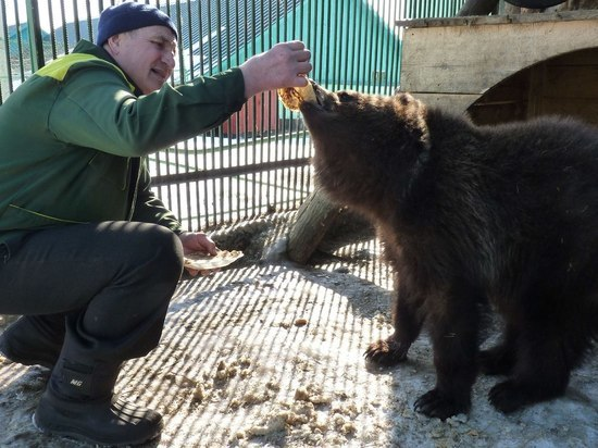 Зоопарк в Омской области объявил конкурс на лучшую колыбельную для медведицы