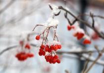 Погода в Рязанской области 12 января