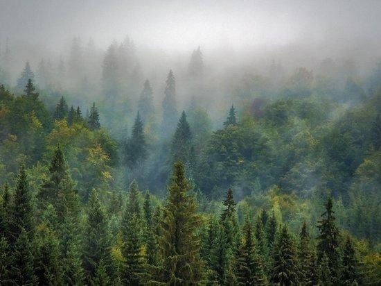 Промышленники на Колыме использовали лесной участок без разрешения