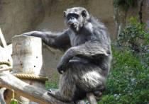 Несколько горилл в сафари-парке зоопарка Сан-Диего (Калифорния) дали положительный результат на коронавирус, что считается первым известным случаем среди таких приматов не только в Соединенных Штатах, но и, возможно, во всем мире