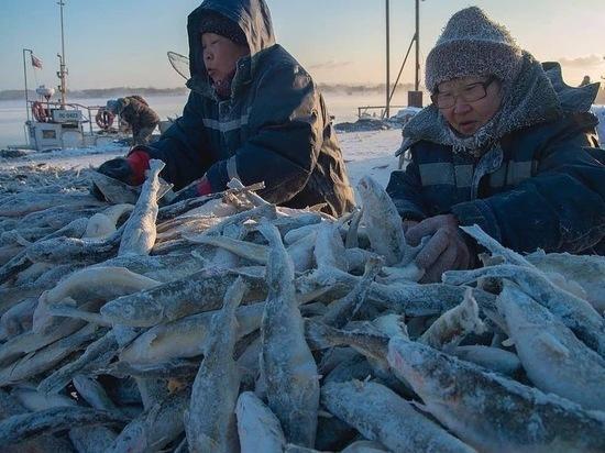 У берегов Сахалина начали промысел наваги
