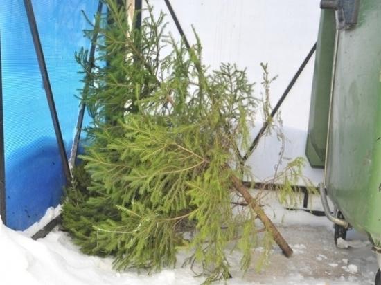 Жителей Тверской области попросили перестать «украшать» контейнеры елками