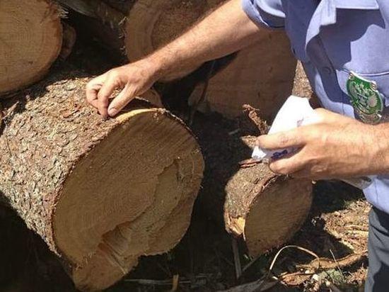 Специалисты проверили эскпортируемую из Твери древесину