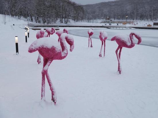 Розовые фламинго поселились на Комсомольском озере в Ставрополе