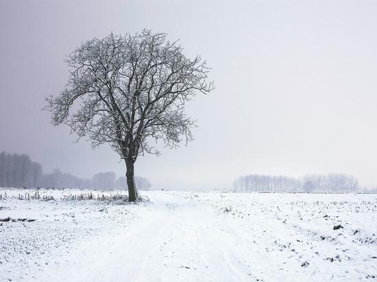 Поля Томской области начали удобрять к посевному сезону