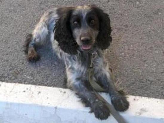 В Северной Осетии наркодилера задержали с помощью собаки